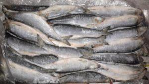 Что делать, если вы обнаружили паразитов в рыбе: можно ли есть и при какой температуре они погибают?