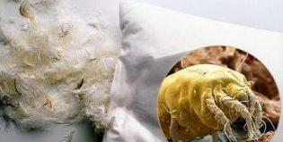 Постельные клещи: причины появления их в доме и способы борьбы сними