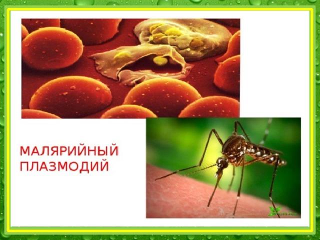 малярийный плазмодий латинское название