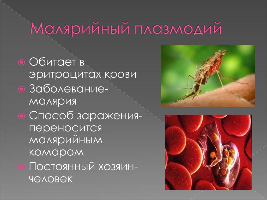 стадии развития малярийного плазмодия в организме человека